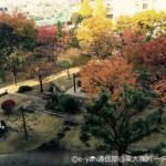 秋の風物詩~紅葉~