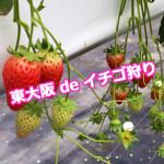 東大阪 de イチゴ狩り 3rd