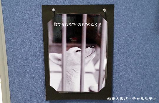 児玉小枝 動物愛護写真パネル展「ラストレポート~この世に生を受けて」