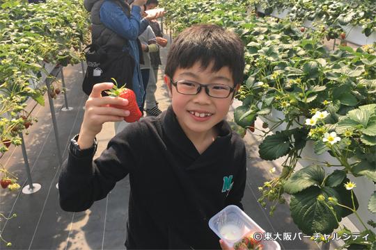 子供の握りこぶしよりも大きなイチゴがたくさんあってみなさん興奮気味でした!