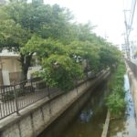 夏でも涼しげ!長瀬川